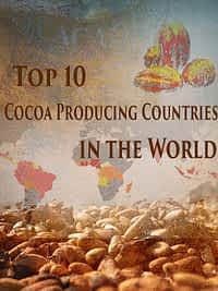 Top 10 cocoa producing countries in the world.