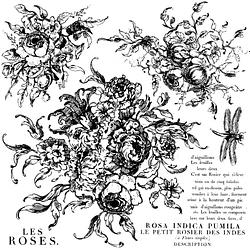IOD Decor Stempeln Rose Toile