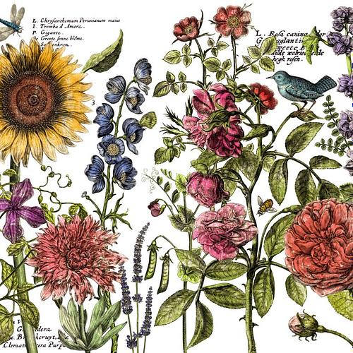 IOD Botanist's Journal Decor Transfer