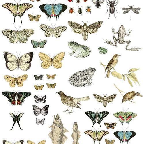 iod-entomology-etcetera-transfer-iron-orchid-designs