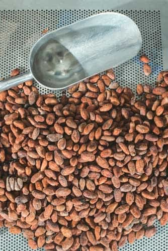 Cooling cocoa beans